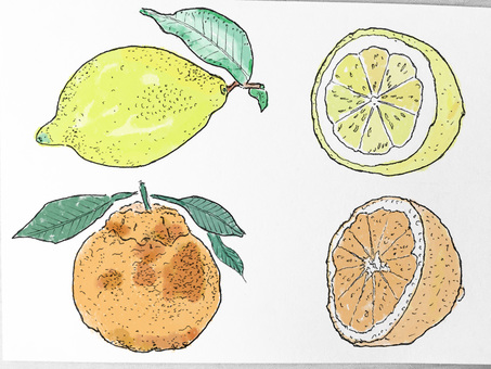 Citrus illustrations