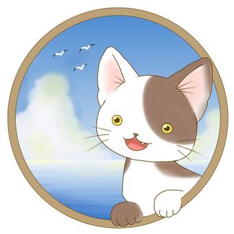 Baby cat - sea