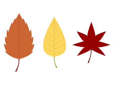 3 kinds of fallen leaves