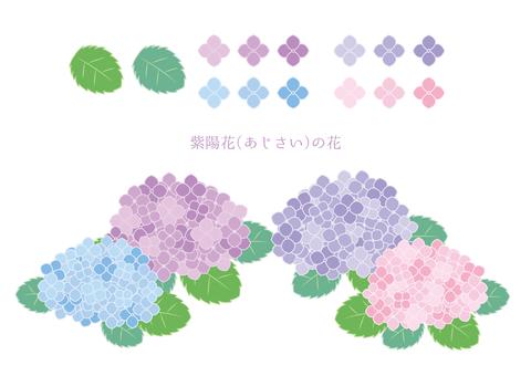 자양화 (수국) 꽃