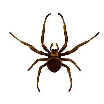 Spider 1