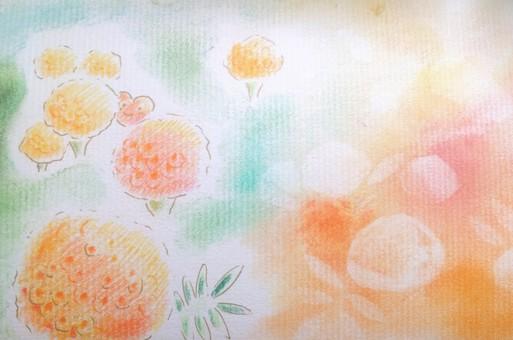Horohogo萬壽菊