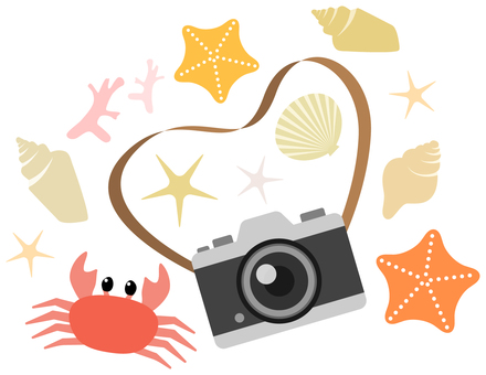 Camera and crab and starfish etc