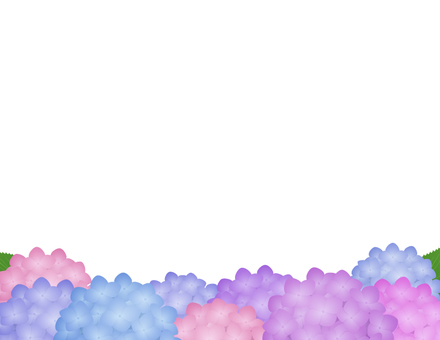 Hydrangea background _ white