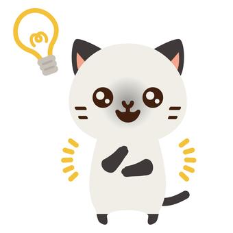 Answer cat