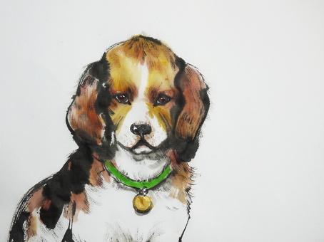 Beagle looking at owner