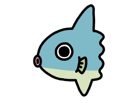 Fresh fish boyfriend blue