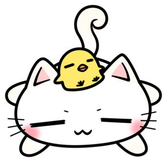 단짝 것 같은 白猫 짱과 병아리