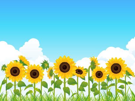 Summer sun and sunflower field background 02 (RGB)