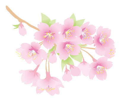 벚꽃 가지 밝은 핑크