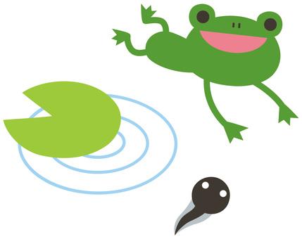 Tobicol frog