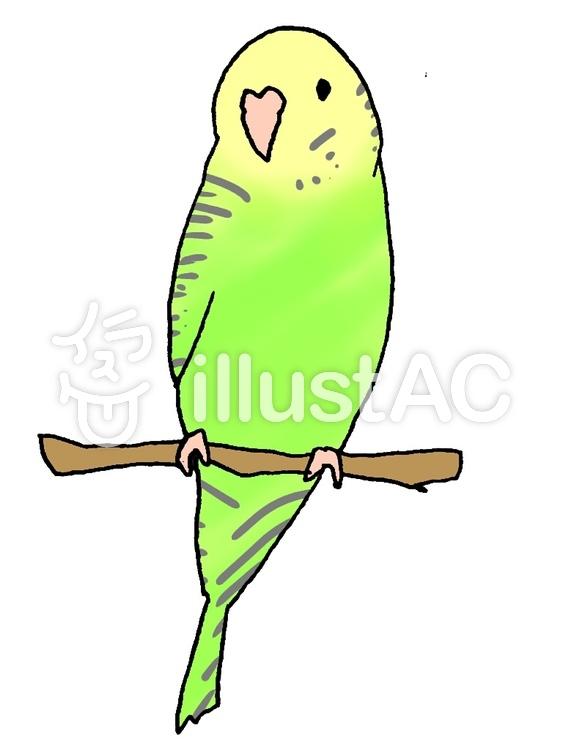 黄緑のセキセイインコイラスト No 643161無料イラストなら