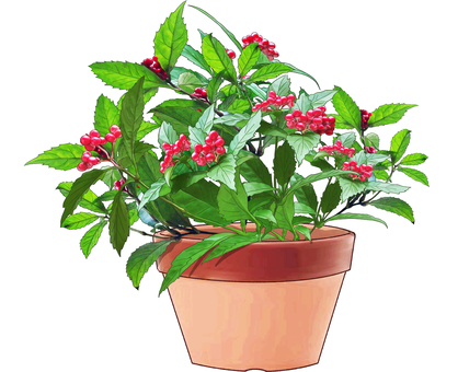 Potted Plant of Sri Lankan