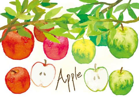Watercolor style apple