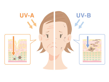 Skin _ Ultraviolet radiation effect _ Face and section