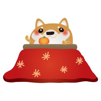 Shiba Inu kotatsu