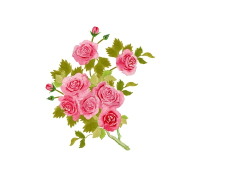 chacha rose rose