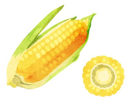 Ingredients_Vegetables_Tone_Watercolor