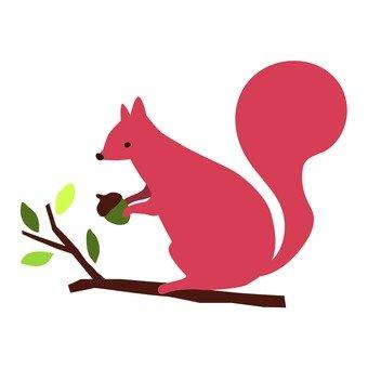 松鼠誰跟橡子的樹的頂部