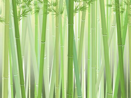 Bamboo grove_horizontal_dark background