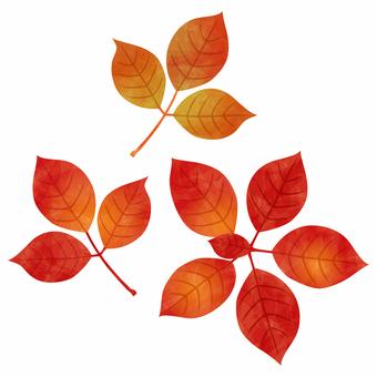 Autumn leaves / Dumantzia / poison ivy