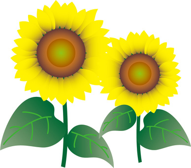 Sunflower (two)