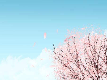 봄 벚꽃 푸른 하늘 배경