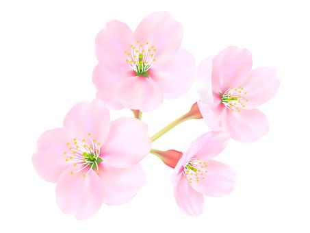 0002_ 벚꽃