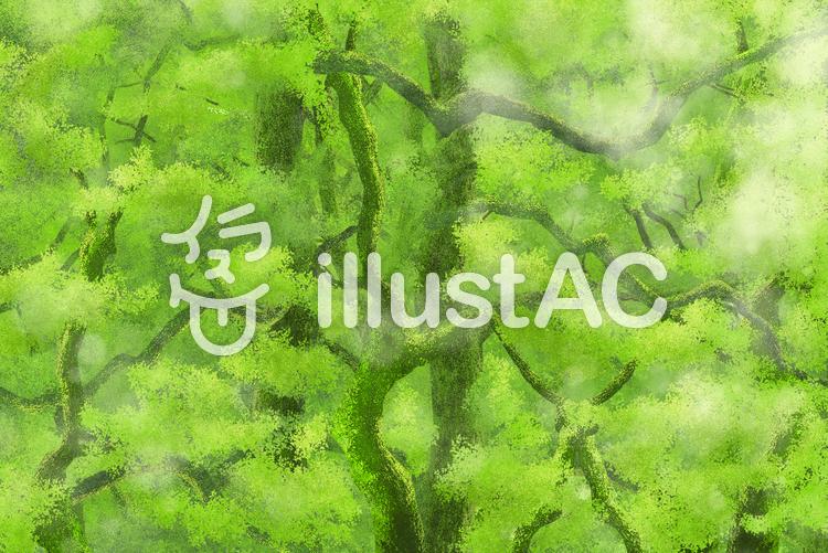 静謐な新緑の森林