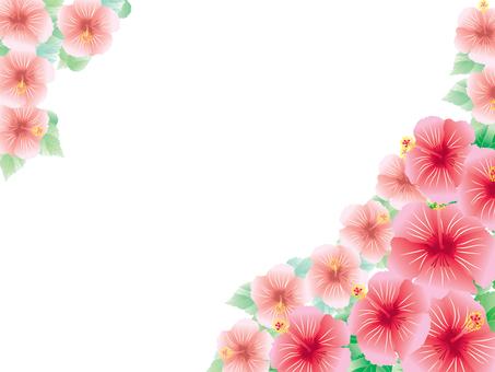 Hibiscus _ Card 2