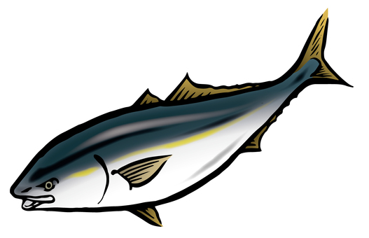 Yellowtail