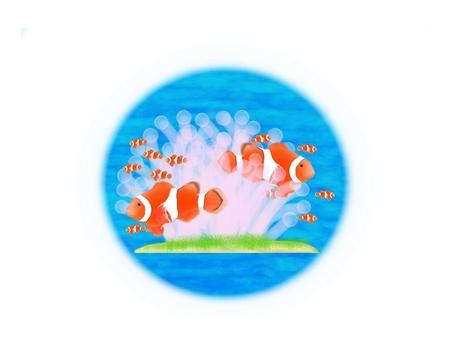 Anemonefish Anemone Background Transparent Version