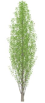 Trees _0003_01