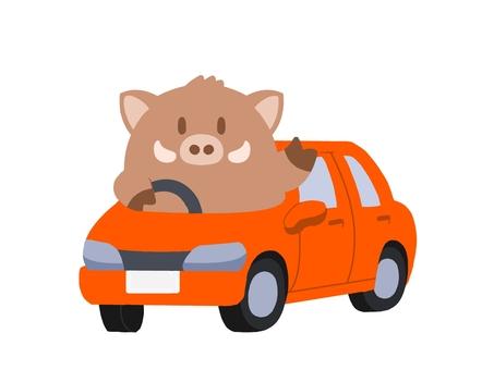 A wild boar on a car