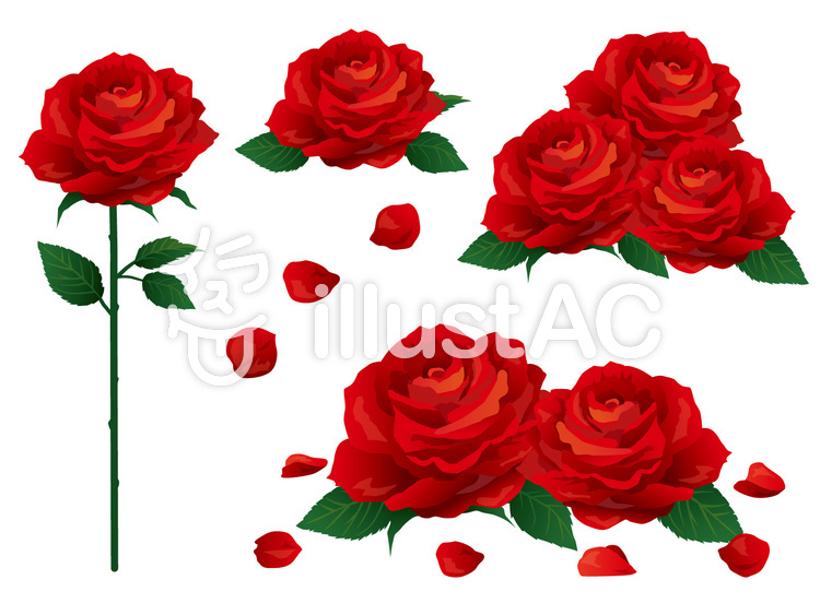 リアルな赤いバラ素材集イラスト No 436748無料イラストなら