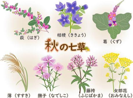 秋の七草 名称あり