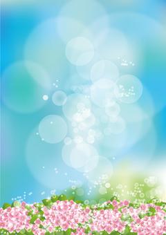 Aozora & hydrangea 31