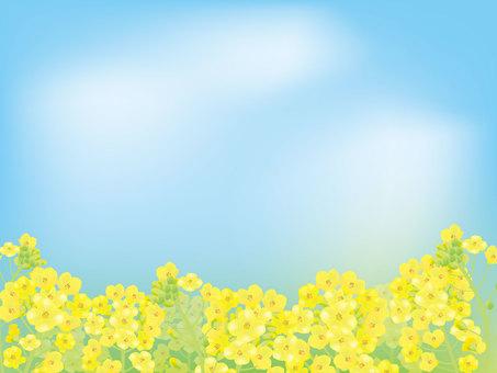 유채 꽃밭 1
