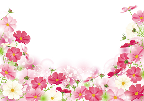 秋桜畑フレーム
