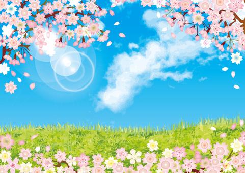 桜 blowing snowflakes, blowing snow, spring green grassland wallpaper background, wishing to enter the school