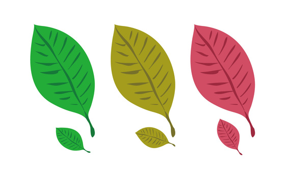 Material leaf (3 kinds of autumn leaves)