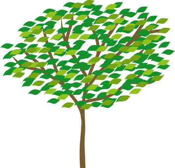 Fresh green tree 3