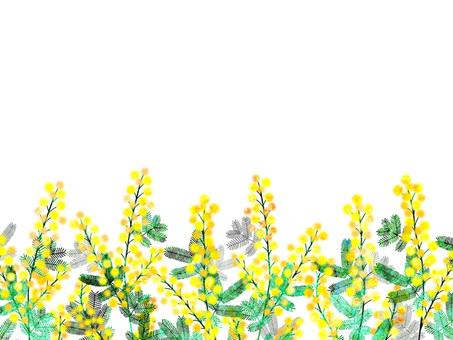 미모사 _ 프레임 02