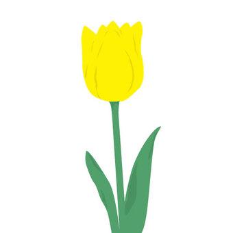 Tulip (yellow)