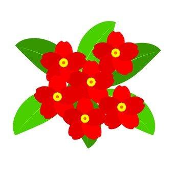 Flower bouquet red