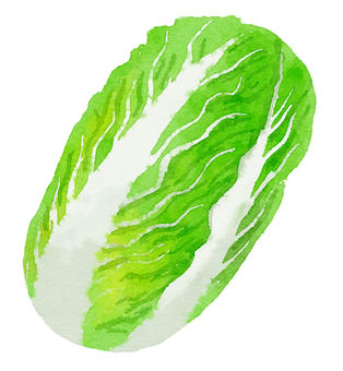 Watercolor food series Chinese cabbage