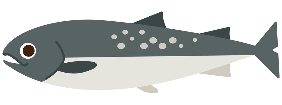 바다 생물 - 연어