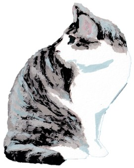 Sabashiro cat looking back at sitting pose