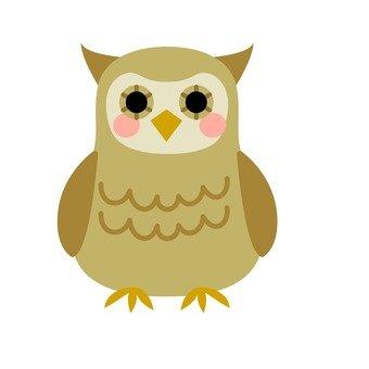 Owl, tea