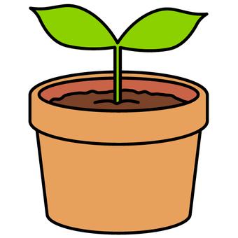 Seedlings / eco (unglazed food